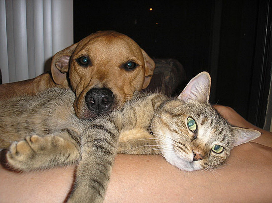 Фото собак и кошек смешных