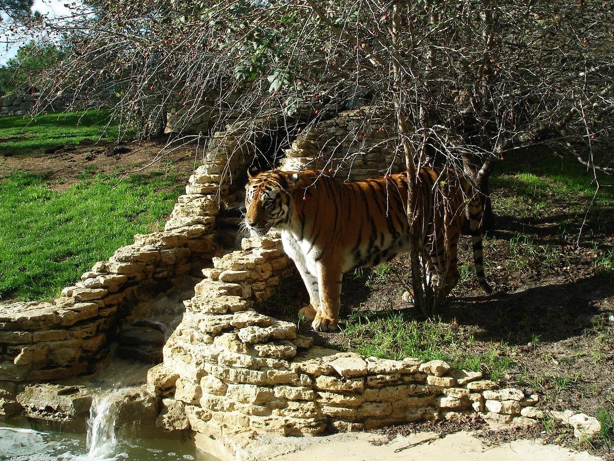 Сафари-парк в геленджике картинки