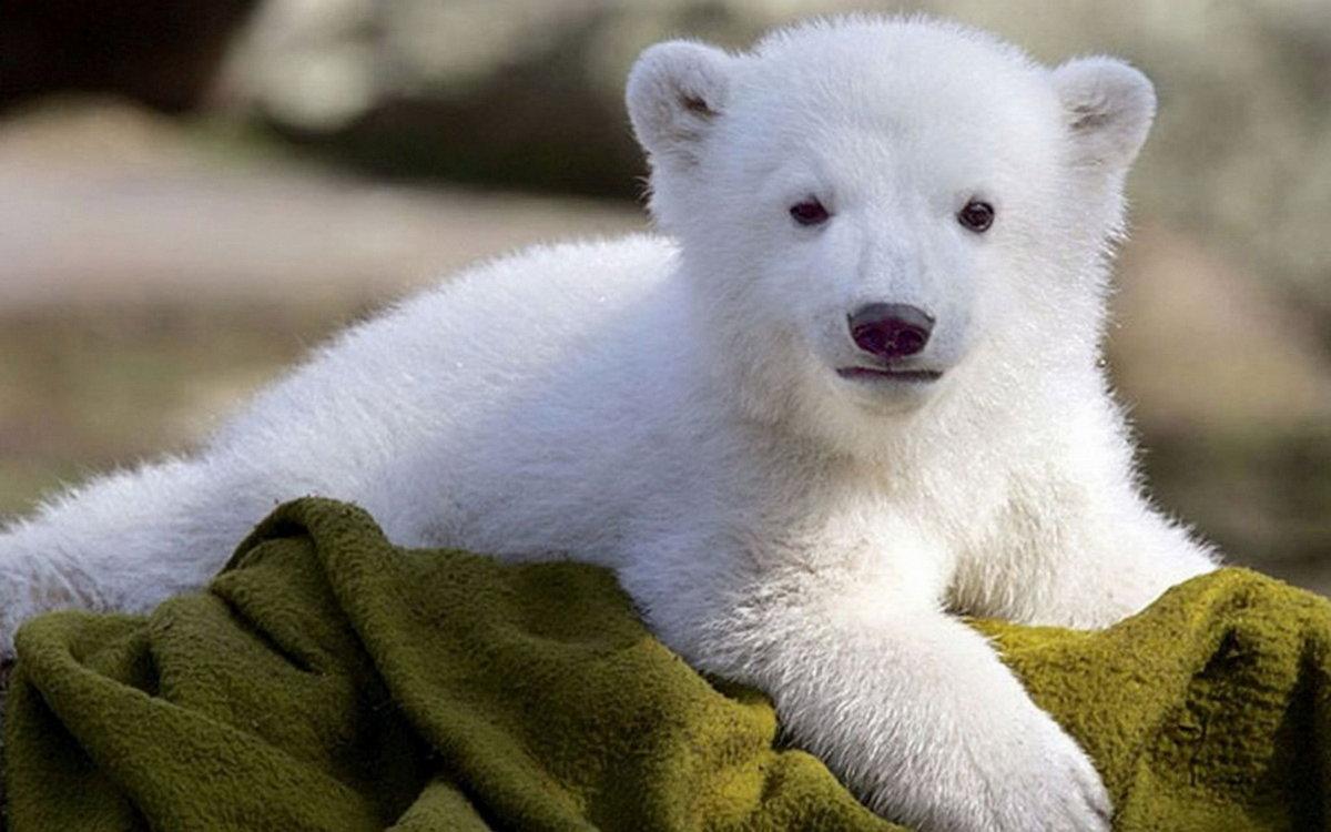 Медвежонок картинки красивые