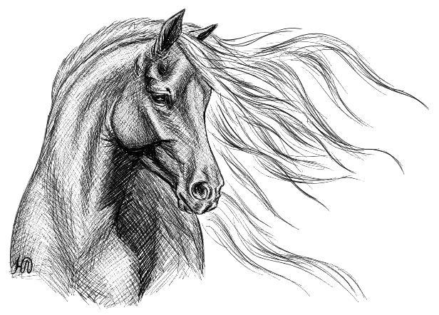 рисунки фото лошади