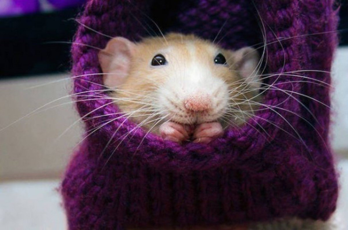 Мышь смешная картинки, открытки мама