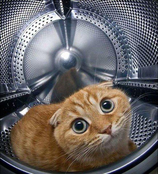 Смешные коты со словами картинки, смешные картинки