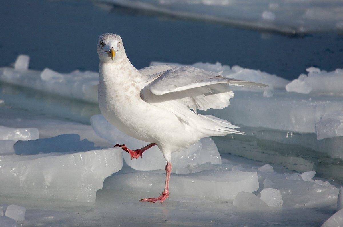 чайки фото север урезают социальные