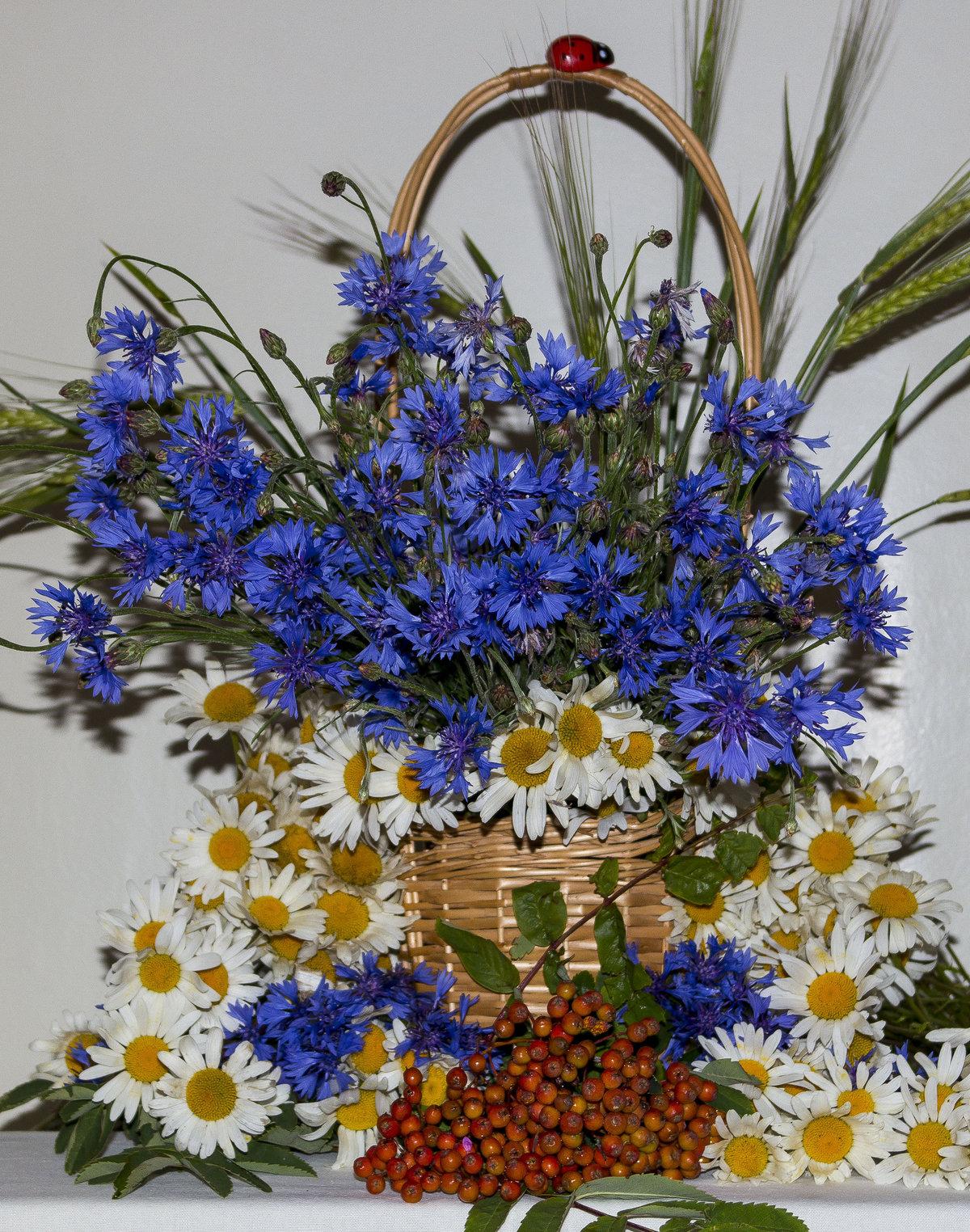 названа открытка полевые цветы с днем рождения роль