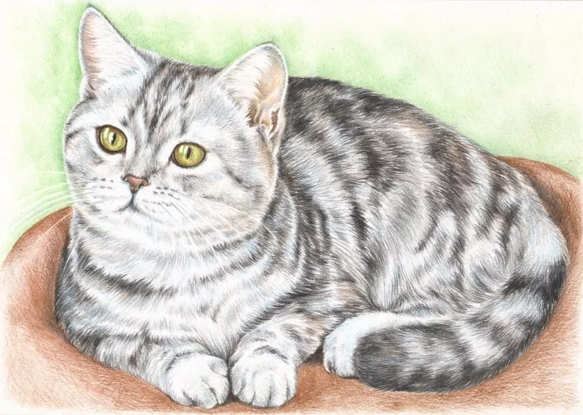 Картинки кошек рисунок