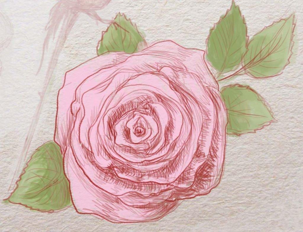 картинки роза как нарисовать многие