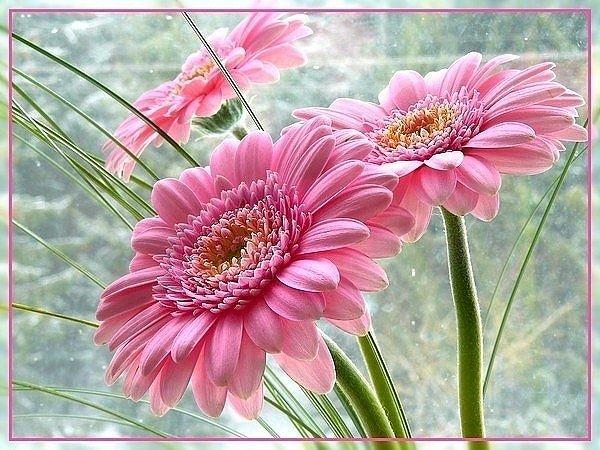 Анимационная картинка цветы подруге преимущество