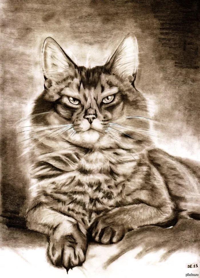 Картинки нарисованных кошек красиво