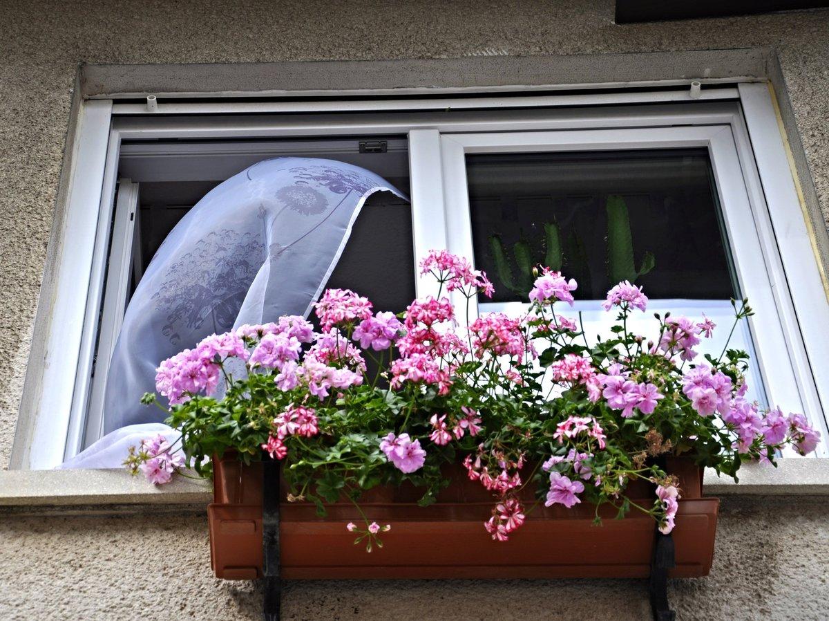 оформление цветами окна городских квартир фото пирог