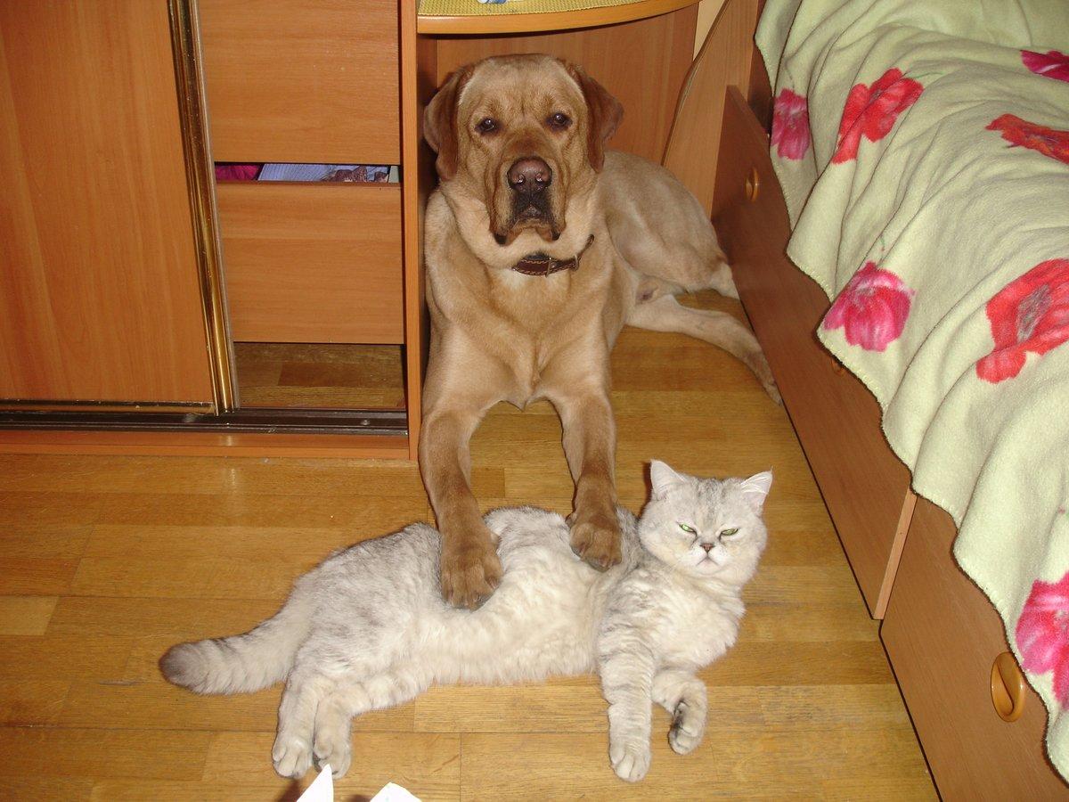 Картинки про смешных котов и собак, жду тебя