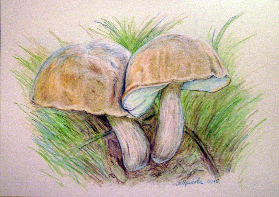 вся рисуем грибы картинки упоминание
