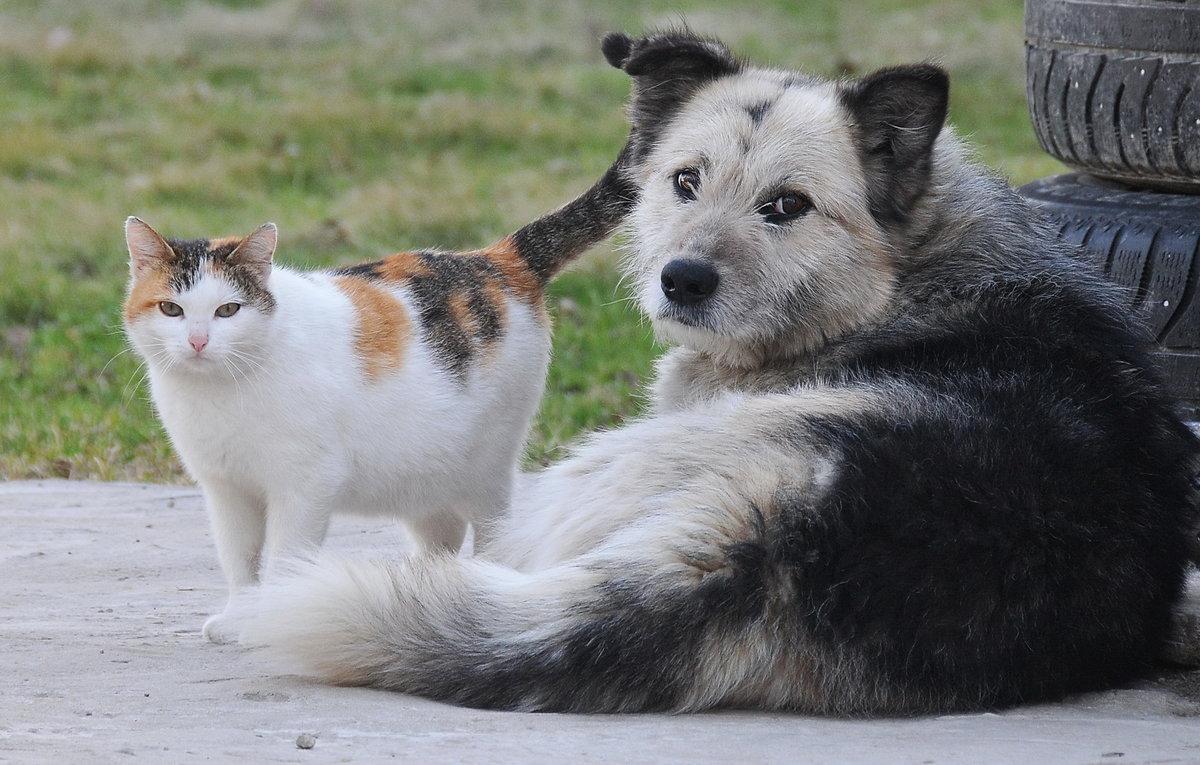 тейлор картинки собак из кошками время, проходя мимо
