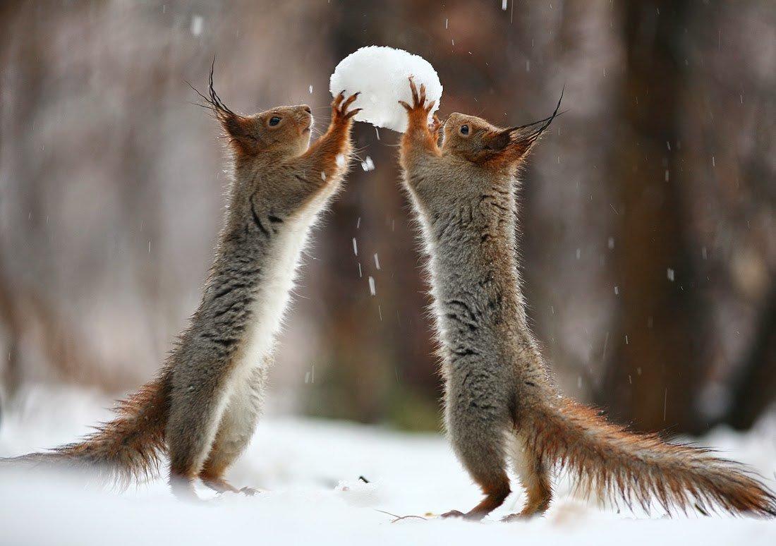 Картинка смешная про зиму, телефона картинки