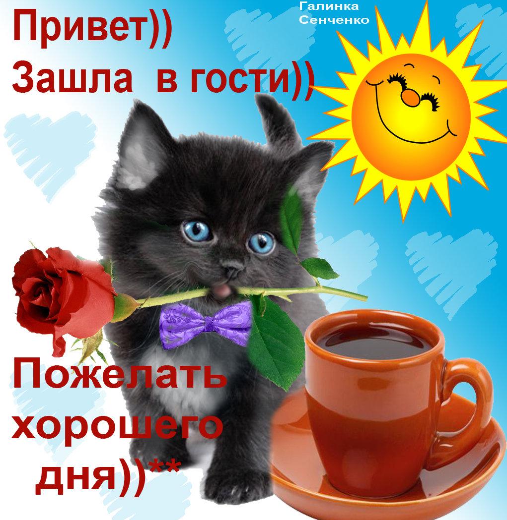 Картинки привет доброго дня