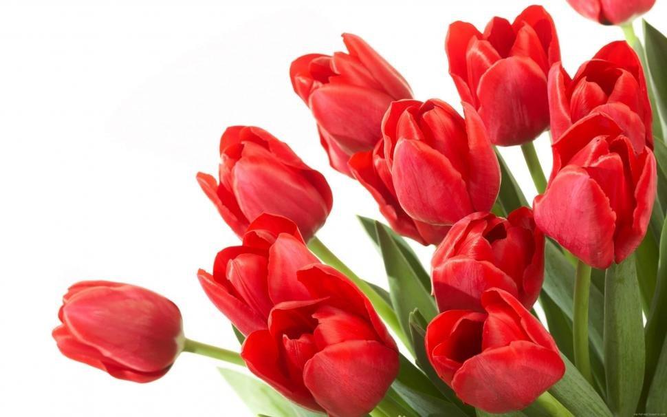Картинки тюльпаны красные, работе офисе