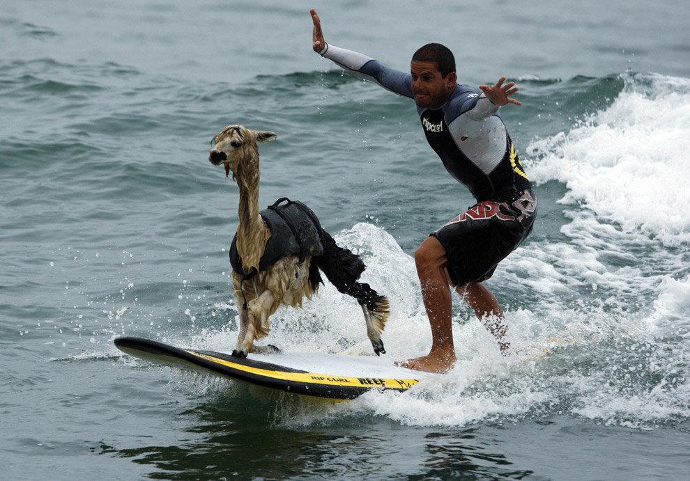 Текст картинку, очень смешные картинки с животными и людьми