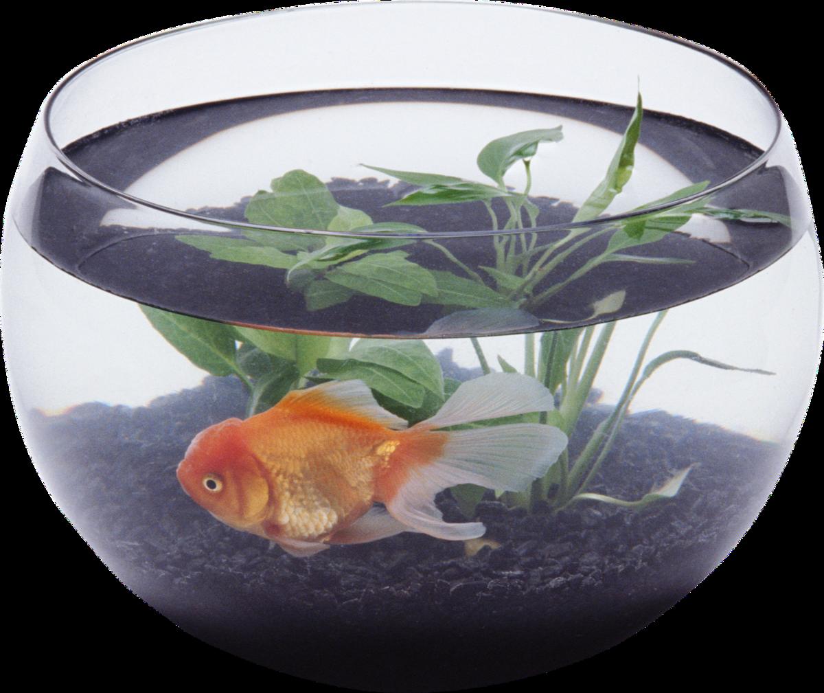 Аппликация, рыбка в аквариуме открытка