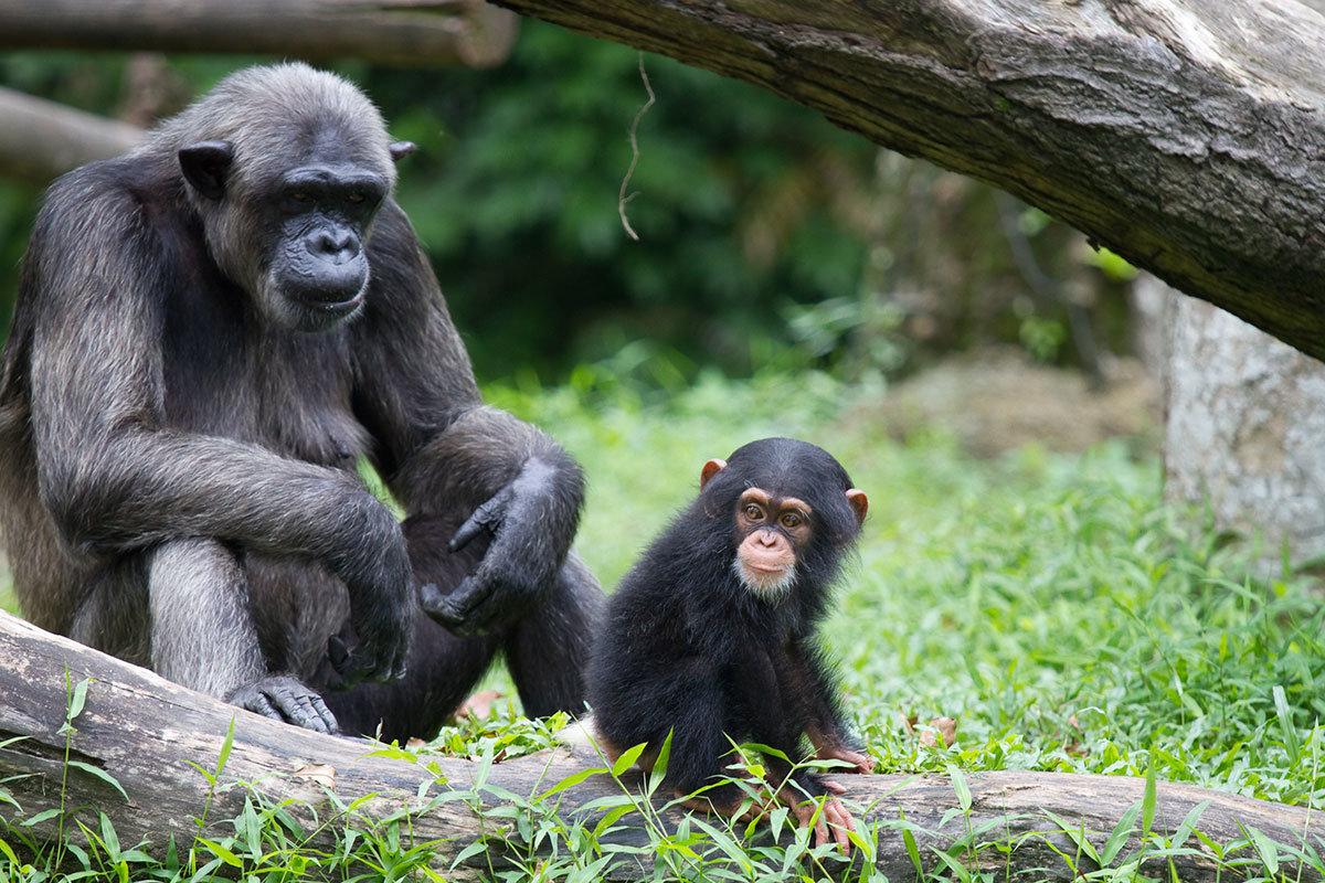 Картинки с изображением обезьян