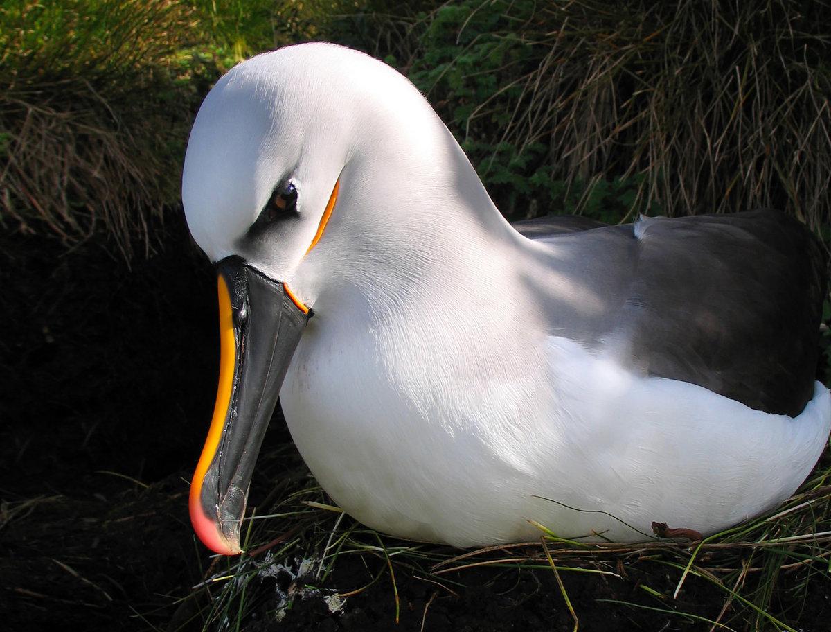 рассказывали, что фото птицы альбатрос она исполнила