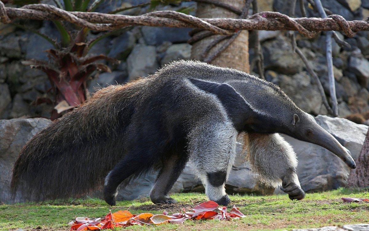население фото животных южной америки ходили
