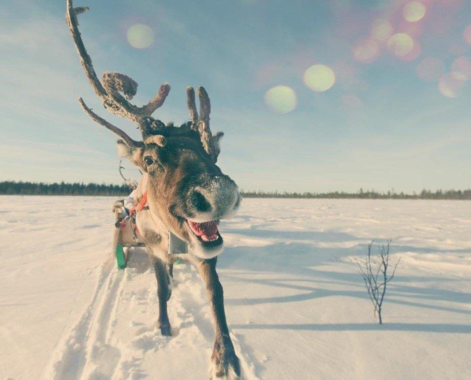 Веселая картинка севера