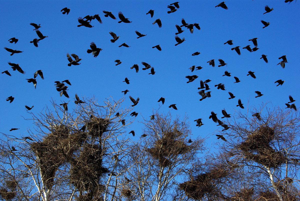 своим картинка птицы улетают из гнезда время мог