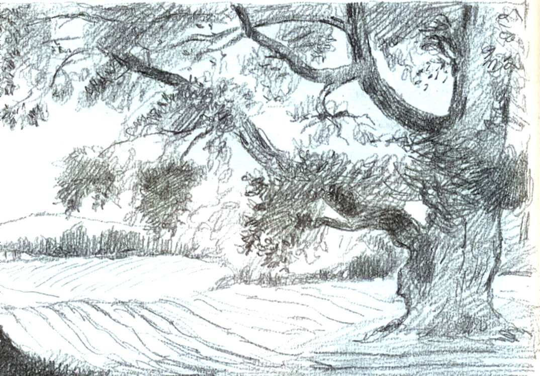 Картинки леса карандашом легкие