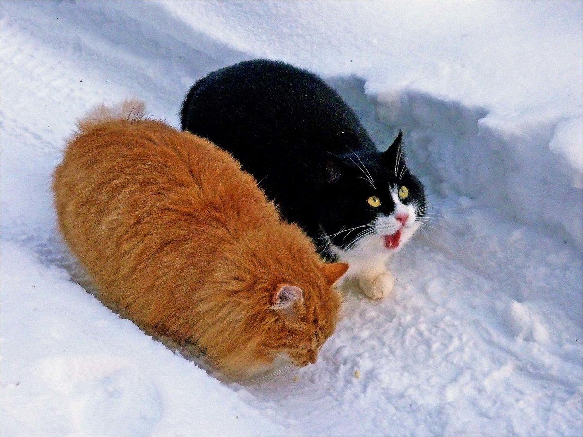 Жирный кот картинки с надписями