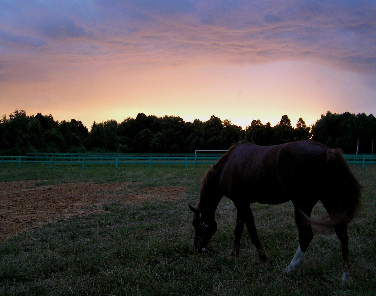 В ночное с лошадьми картинки
