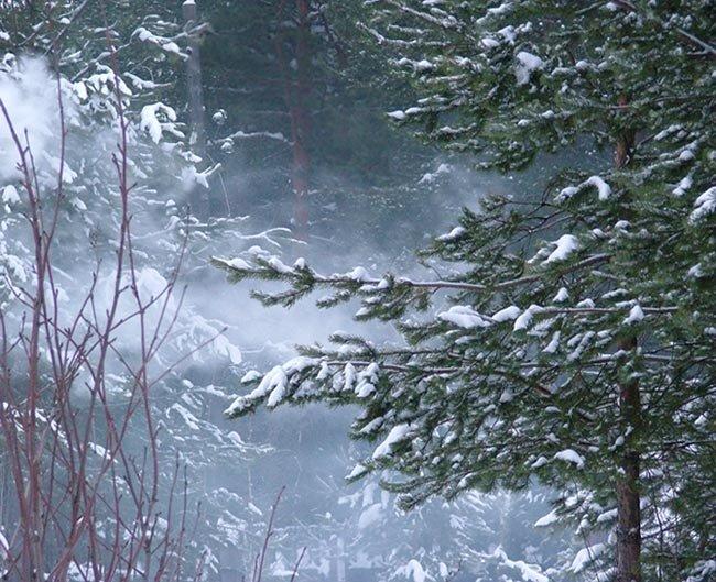 мужчины анимационная картинка заснеженный лес пурга метель кто заботиться