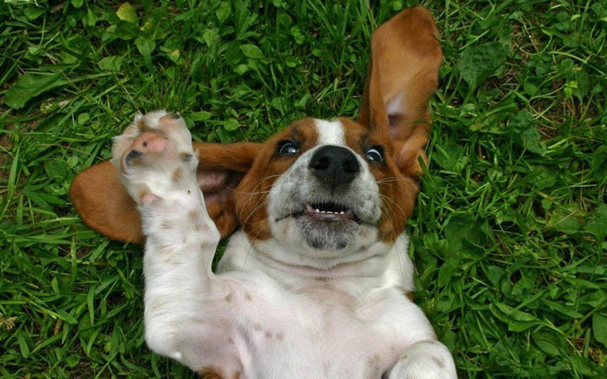 Открытка, картинки собак с приколами