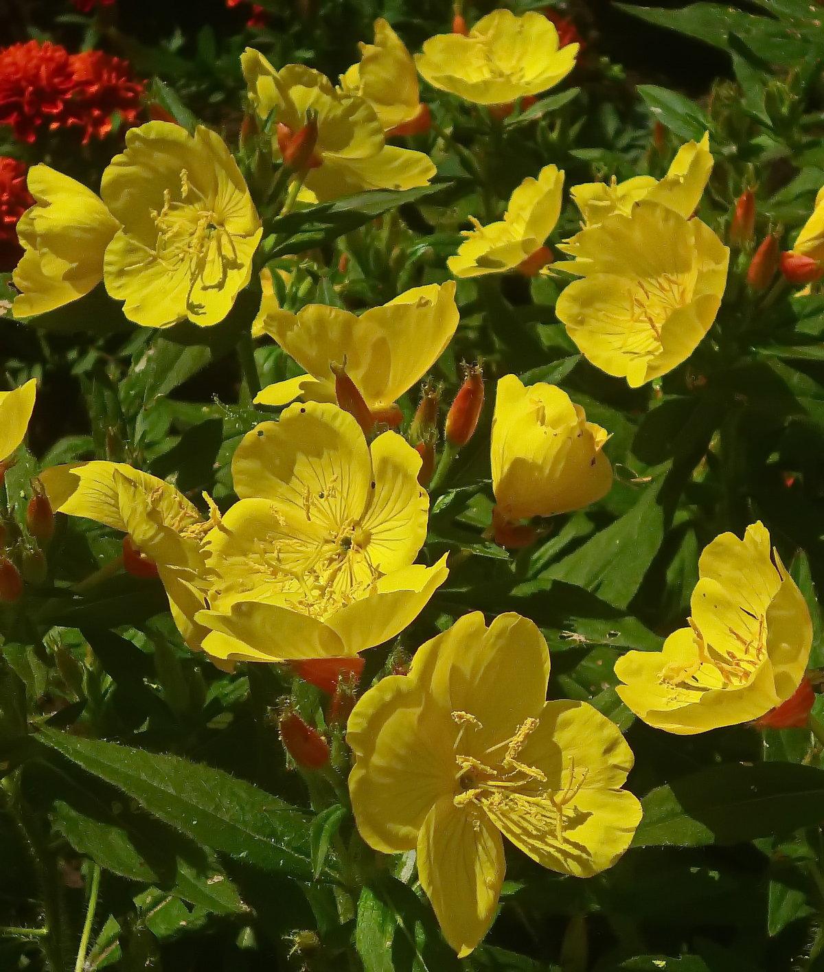 Картинки женский ноги туфли цветы этой картинке