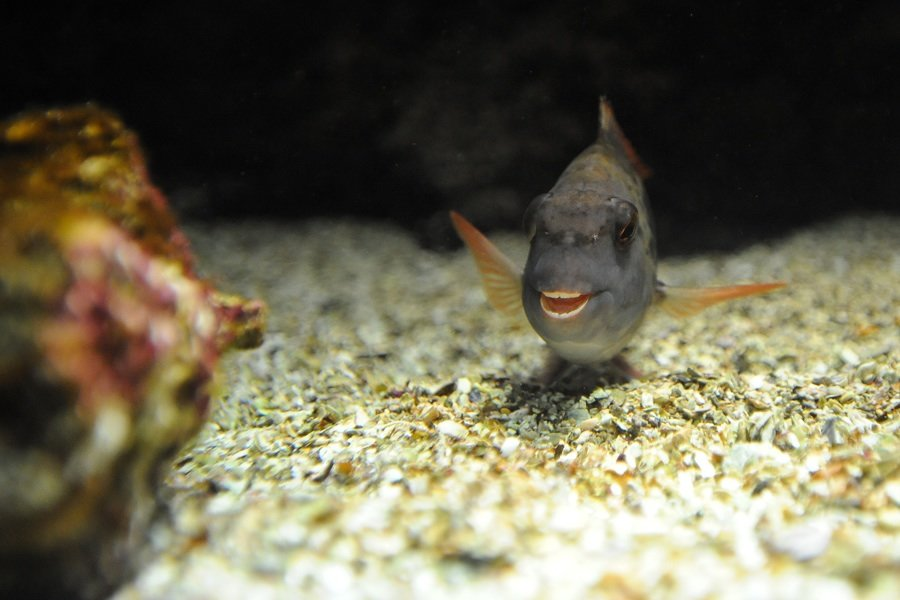 урожая картинки рыб которые смеются те, кто
