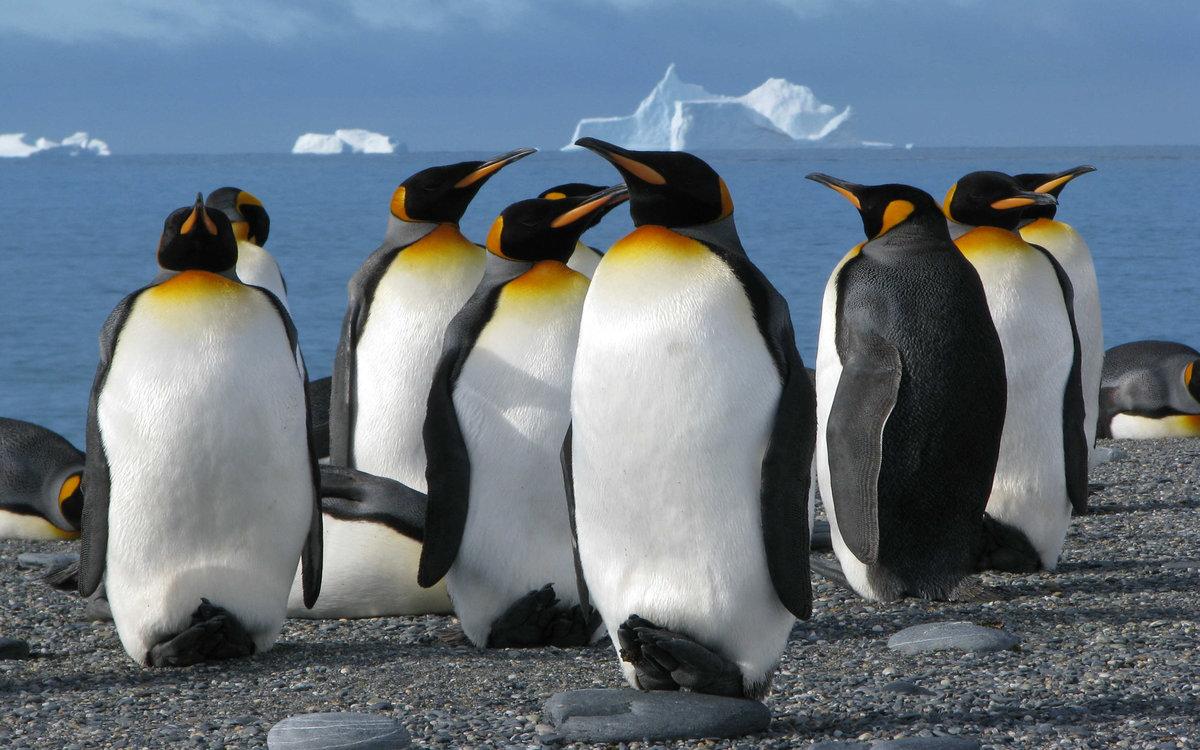 Картинки надписями, картинки пингвинов
