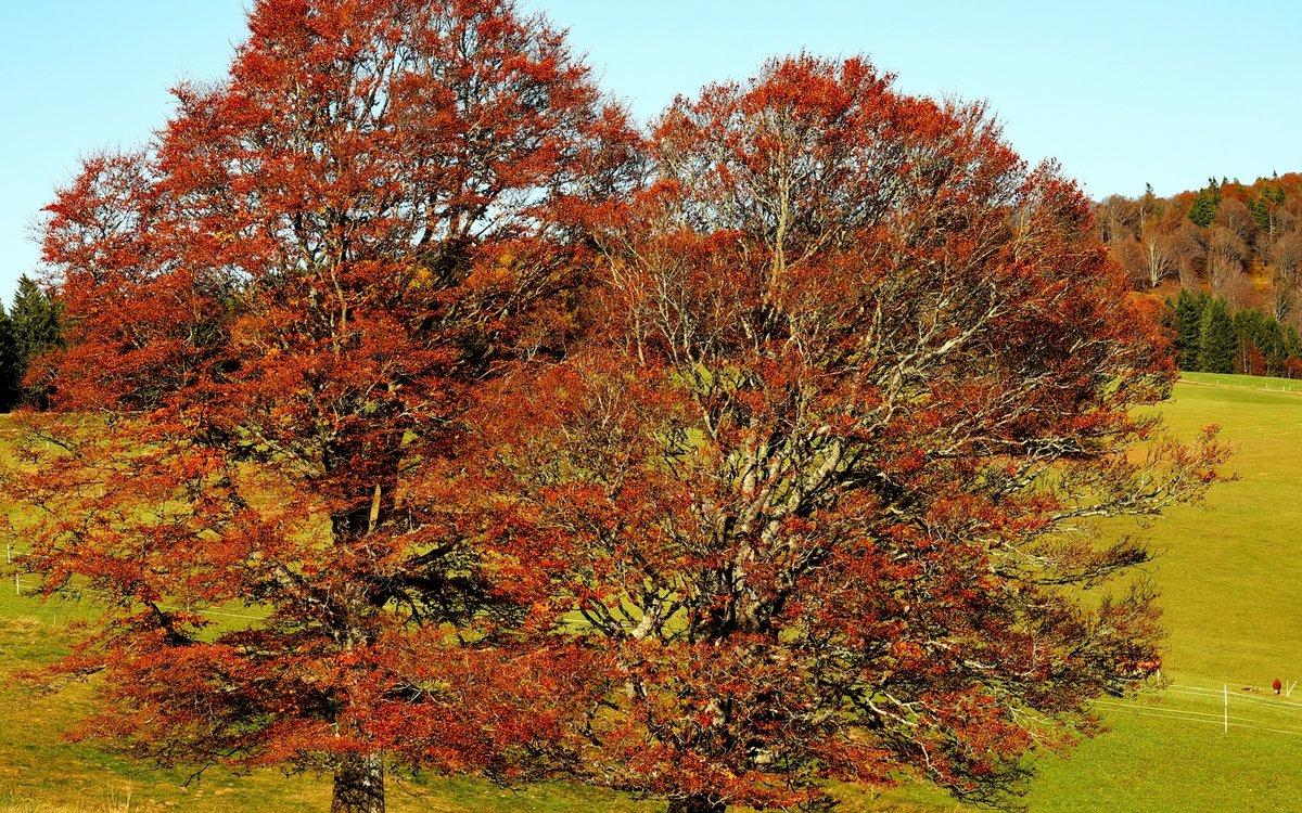 осенние деревья фото и названия выхода