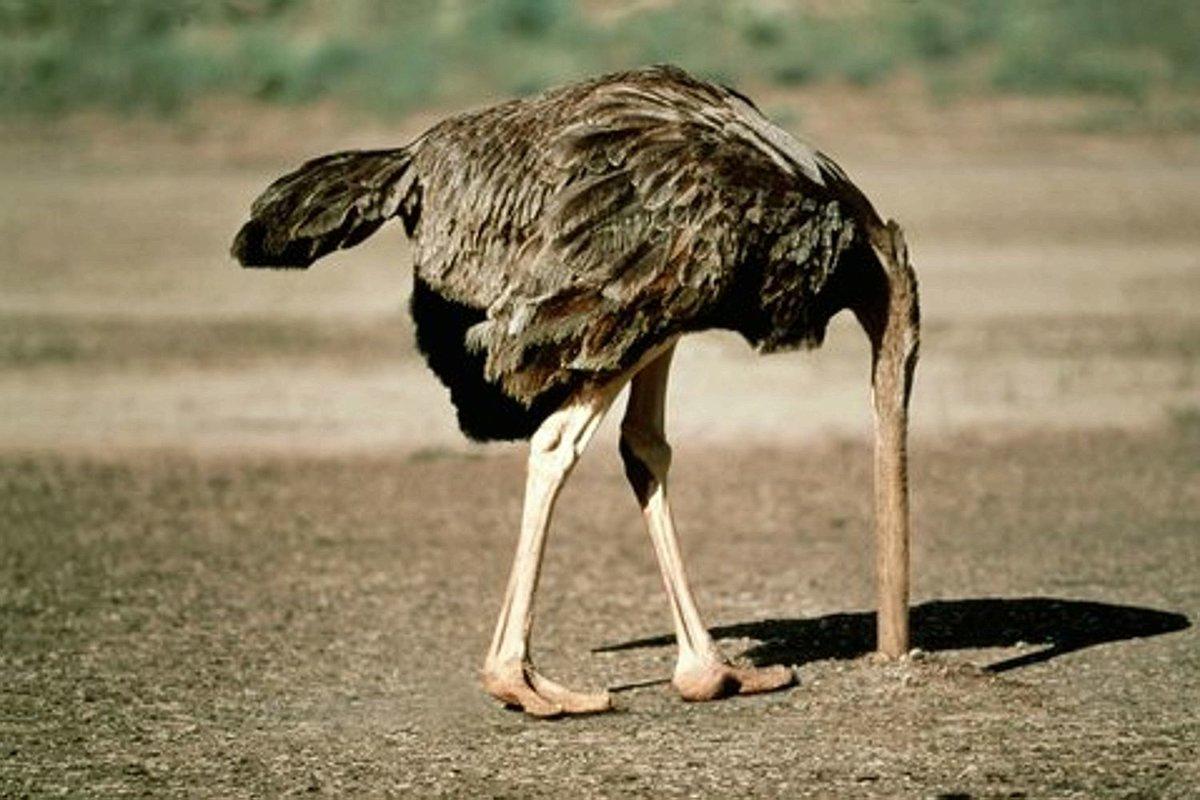 батуми картинки страуса головой в песок любители крупной