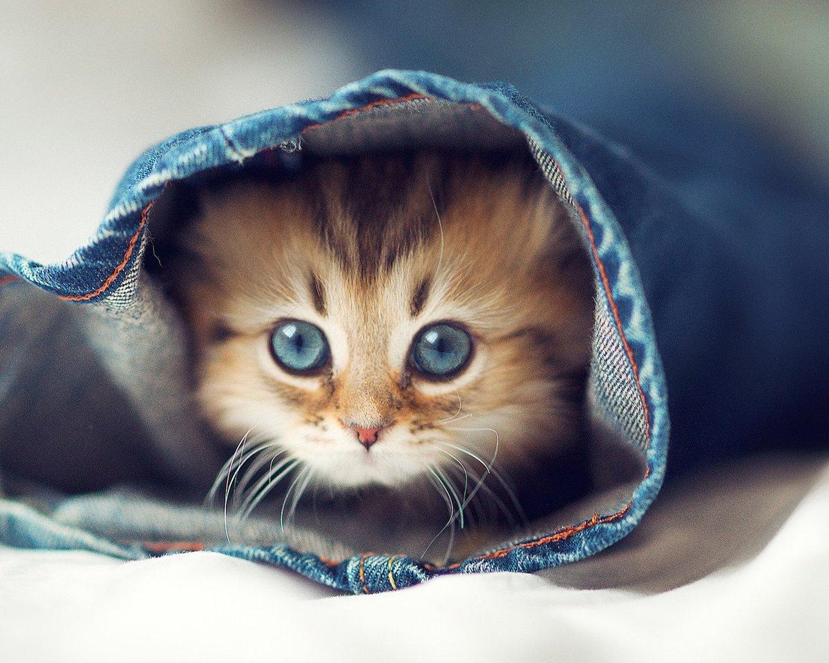 Прикольные кошки картинки на аву в вк