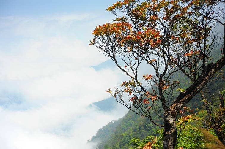 деревья во вьетнаме названия и фото