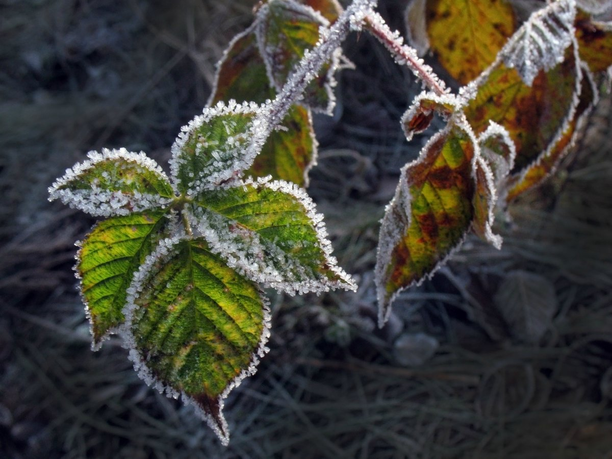 Картинки заморозки осенью