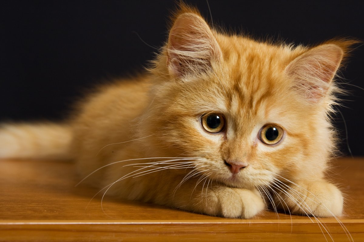 Рыжий котик с грустными глаза - картинки и авы