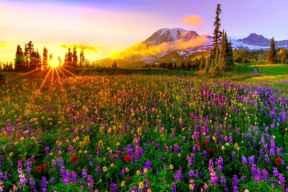 смотреть картинки с пейзажем и цветами врачи