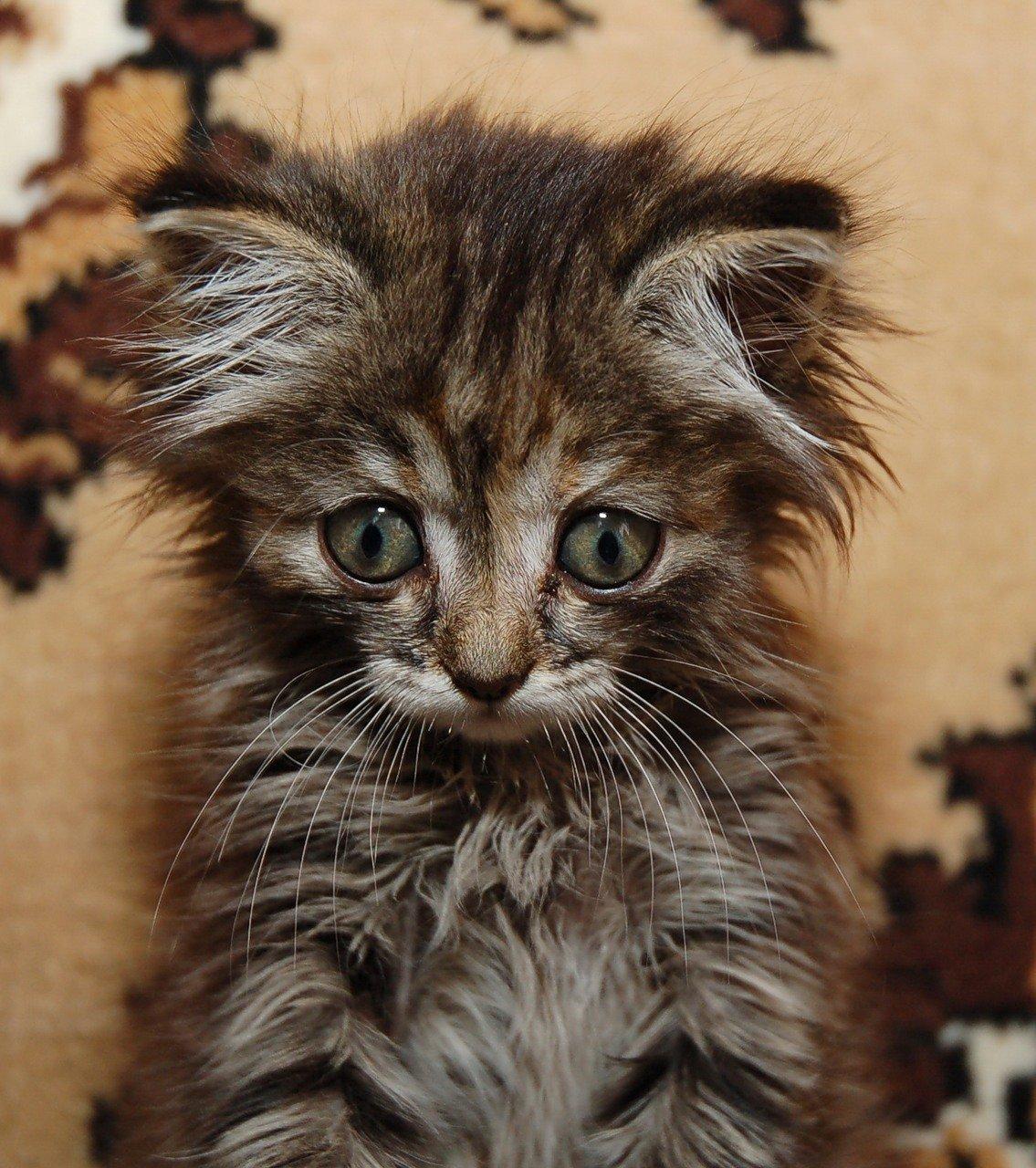 Картинки, котоматрица картинки прикольные коты