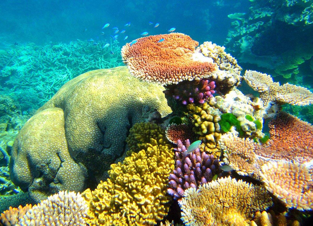 фото новые подводного мира дома