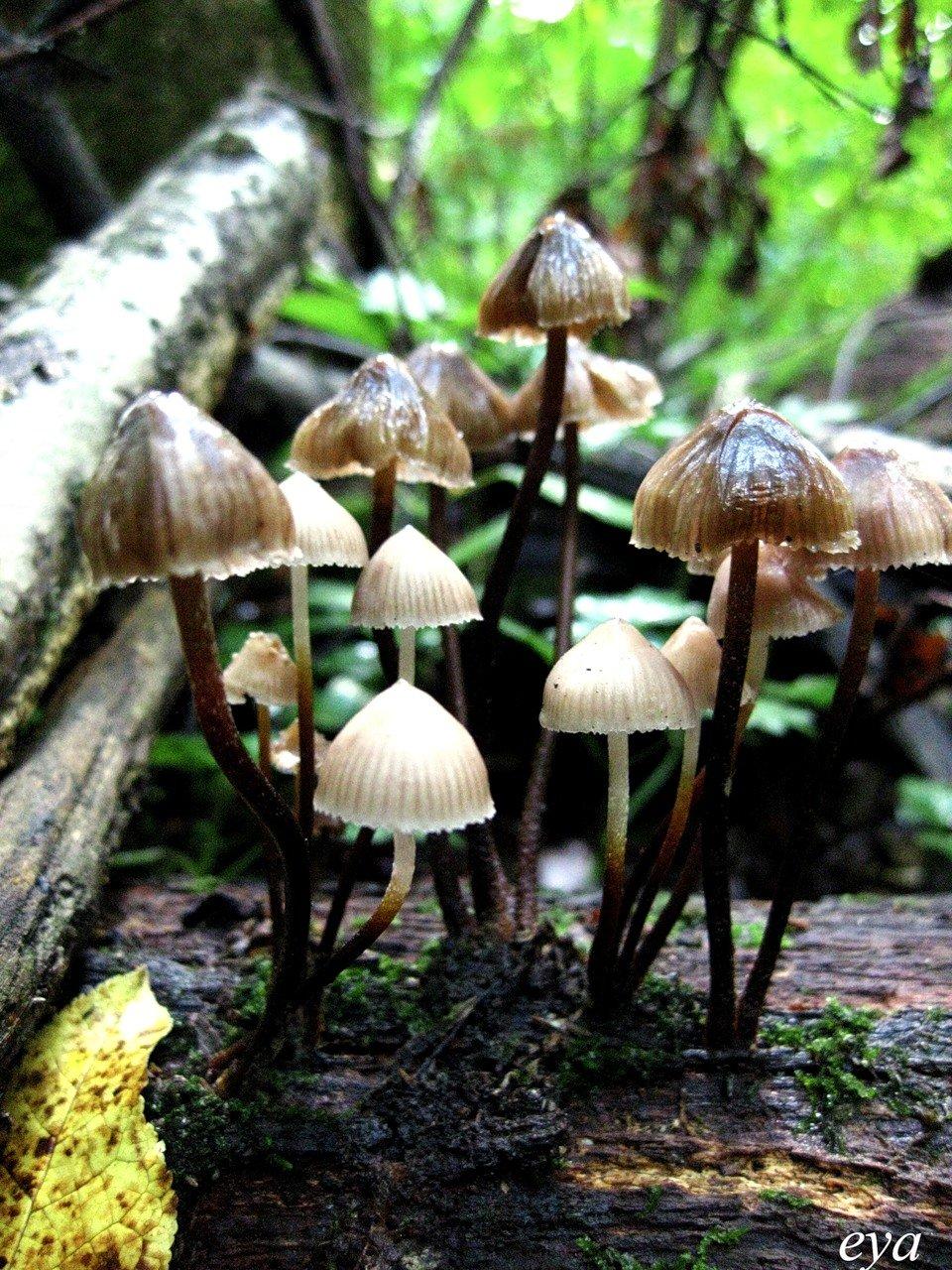 разрядить грибы поганки фото с названиями орлов человек