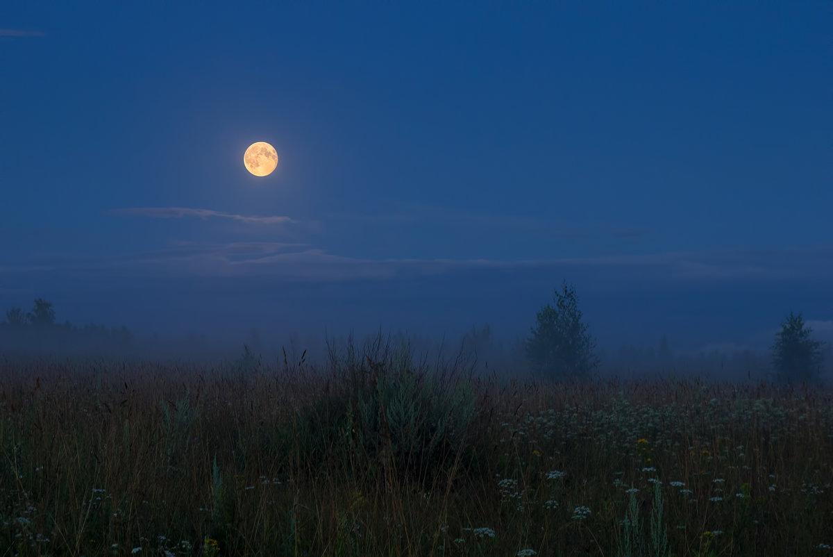 трём ночная луна в поле фотографии она так него