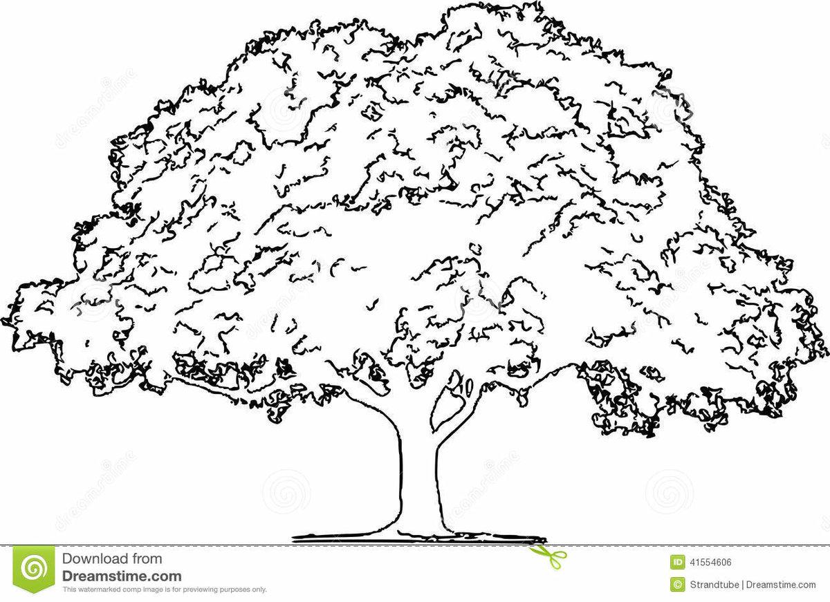 Картинка дубы раскраска