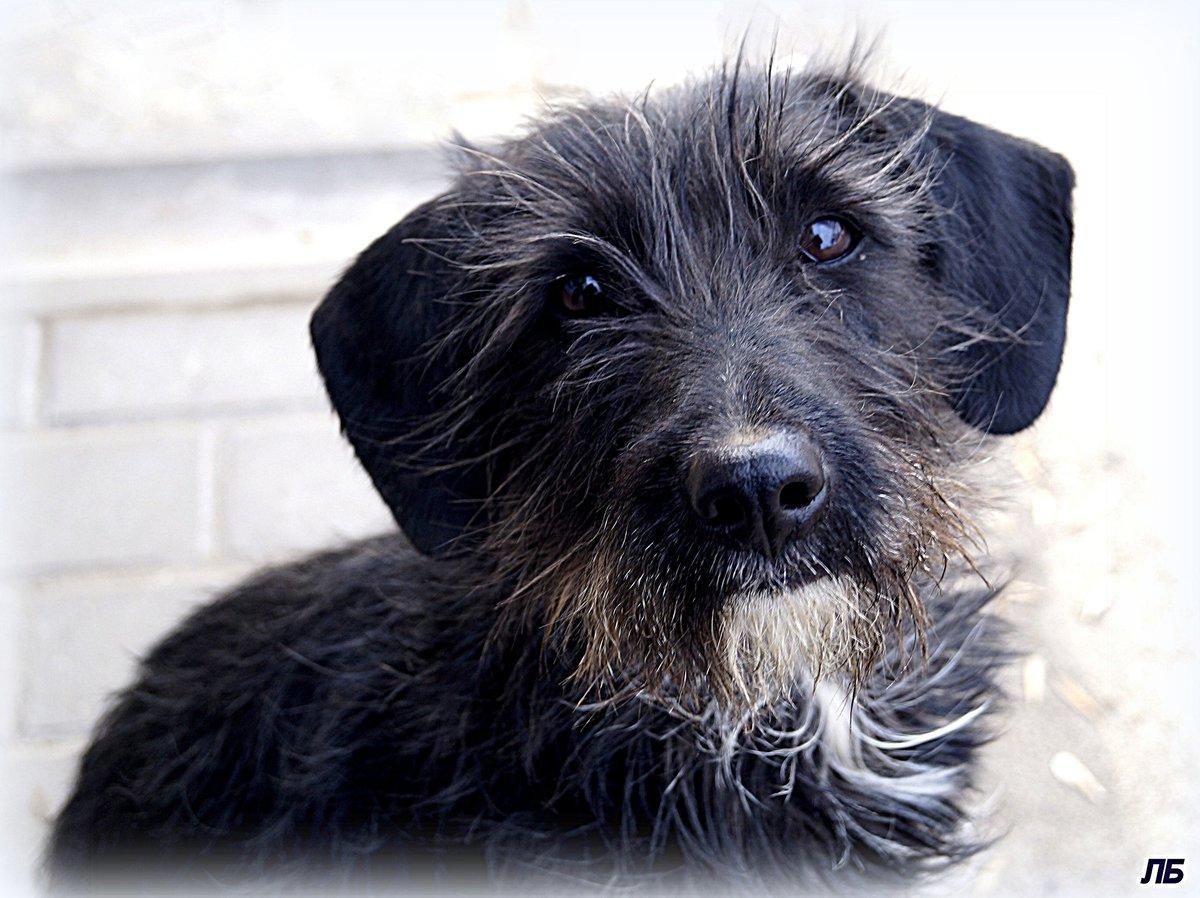порода собак с бородой фото с названиями букеты получаются при