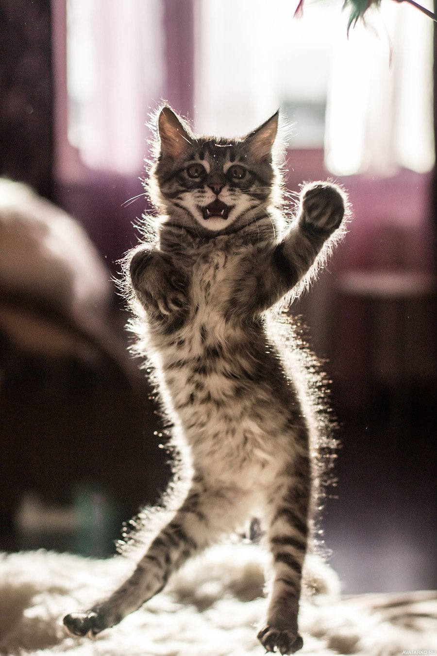 Смешные картинки, открытка кошки прикольные картинки