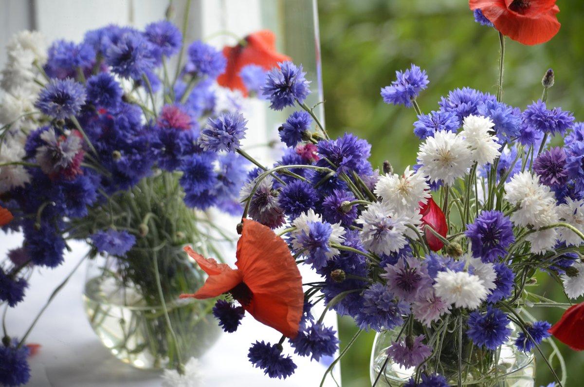 Фото букетов цветов васильки