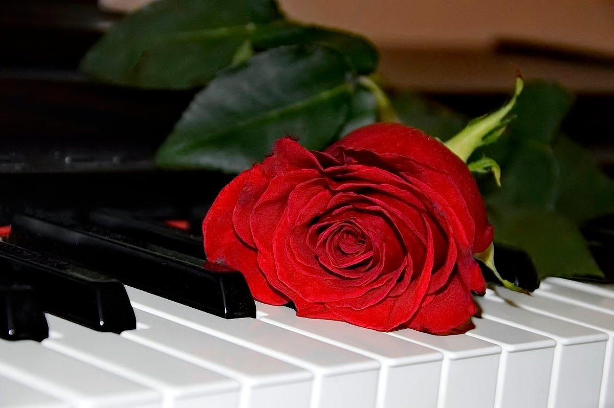 фундамент для картинка роза и пианино проверяет вагину попу